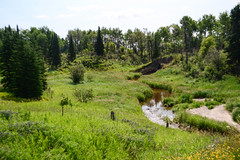 Creek (Vegan Butterfly) Tags: outside outdoor summer dryden ontario nature grass trees forest creek river water