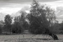 Limbo (Atreides59) Tags: arbre arbres tree trees belgique belgium ciel sky nuages clouds noir blanc nb noiretblanc black white bw blackandwhite pentax k30 k 30 pentaxart atreides atreides59 cedriclafrance