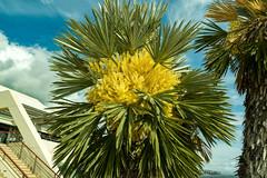 Palm tree (KPPG) Tags: palmtree monaco palme flora 7dwf côtedazur nx3000