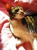 Tasha (the_gonz) Tags: tasha cat kitten murg moggy cute pet family life fur furry adorable home animal