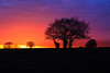 Sundown (microwyred) Tags: grass forestwoods landscape events sunsets nature scenics places beautyinnature sunset nopeople wildflowers sun blue dusk silhouette tree season ruralscene spennells outdoors sky sunlight landscapes branch backlit sunrisedawn