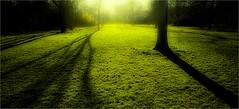 GRASS (bert • bakker) Tags: grass gras schaduwen shadows trees bomen amsterdam flevopark holland namiddag afternoon nikon24mm28d