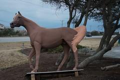 DSC_7500 (Copy) (pandjt) Tags: roadtrip unitedstates usa northcarolina wingedhorseextravaganza horse horsesculpture sculpture statue fiberglasssculpture publicart killdevilnc killdevil