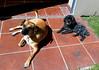 Tomando baños de sol. (jagar41_ Juan Antonio) Tags: perros perro animales animal mascota mascotas