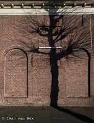 Shadow on the wall... (Ivan van Nek) Tags: achtergracht weesp thenetherlands noordholland northholland nederland dieniederlande paysbas wall bricks redbricks shadow nikon nikond7200 d7200
