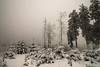 MYST (PetschoX5) Tags: petscho freedomstreaming canon 700d photography cyansworld annaandcatherine atrus catherine anna whitesnow snow tree wälder germany deutschland dni