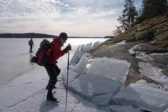 Isen drar sig upp mot land (David Thyberg) Tags: 2018 långfärdsskridsko winter nature skate sweden stockholm skating ice sverige
