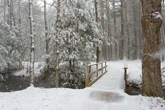 (Chancy Rendezvous) Tags: chancyrendezvous davelawler blurgasmcom blurgasm silent snowfall snow footbridge bridge forest woods path massachusetts weather newengland trees stream water
