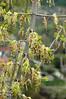 Spring season (Kapitalist63) Tags: spring season tree park wood leaves flora nature color look view sight