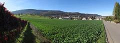 Leimental_02 (Thomas Jundt + CV) Tags: baselland blaueberg blauen ettingen leimental panorama schweiz