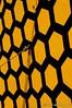 Honeycomb (arcticrail) Tags: reno races racing rara race airplane airshow action aviation aircraft air airraces airplanes nikon