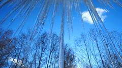 Behind the Ice Curtain (jurgenkubel) Tags: landskap istappar landschaft icicles landscape eiszapfen blå blue blau winther winter vinter träd trees bäume skog wald forest sweden schwaden sverige olympus