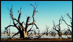 The Ghosts of Menindee Lakes (bushman58929) Tags: australia bushman58929 olympus digital atmosphere lakes water