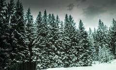 Combloux lomography turquoise 02 2018020 (Patrick.Raymond (5M views)) Tags: alpes montagne haute savoie combloux la cry neigne froid gel hiver nikon argentique lomography turquoise