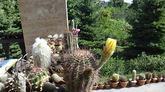 A collection of Cactaceae (armen.cactus) Tags: cactus succulent collection cactaceae flower