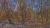 20180402_163720_q (wos---art) Tags: bildschichten wald sträucher bäume äste fusweg wildwuchs natur natürlich gewachsen