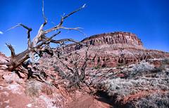 Red Rock Daydream (Blue Sky/Red Rocks\Jeep) Tags: utah hiking adventure redrocks bluesky exploring scenery southwest
