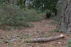 Enchanted Forest 1 NBG (Puddin Tain) Tags: forest norfolkbotanicalgarden norfolkvirginia enchantedforest