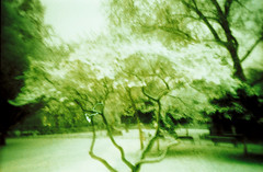 Blurred Nights (010) (romain@pola620) Tags: lomo lomography lca 100iso 100 35mm blur blurry flou nuit night light lumière accident green vert arbre tree couleur color film pellicule analog analogue analogique argentique minimalism minimaliste abstract abstrait grain low lowfi vintagecamera vintage