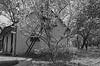 ART_3629 (nemrosim1988) Tags: old украина ukraine дерево tree eldest ancient старый старинный прежний давний бывший давнишний aged дом хата село village деревня