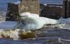 Rapides de Deschênes (ferlen02) Tags: ottawariver riviereoutaouais rapidesdeschesnes gatineau dégel thaw courant printemps spring tourismeoutaouais