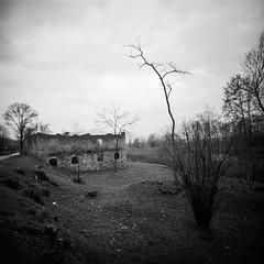 Investigation on desolation (Italian Film Photography) Tags: lca120 bergger pancro400 film analogue abandon desolation landscape decay ruins tree dramatic sky hc110