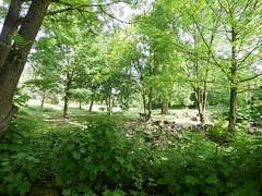 Düsseldorf - Botanischer Garten (gernotp) Tags: deutschland düsseldorf düsseldorfurlaub natur nordrheinwestfalen ort pflanze urlaub grl5al grv4al