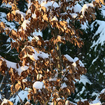 Harz-Oderbrueck_e-m10_1012074140 thumbnail