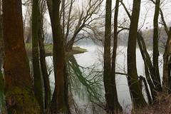 trees at lakeside (bakosgabor57) Tags: wood trees lake d7200 rainy water moss reflection illusion fog