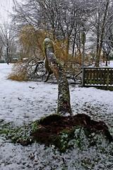 Photos Marco BP (25)_GF (marcbihanpoudec) Tags: bretagne neige plabennec plan deau lac banc arbres