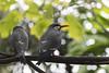 As the twig is bent the tree inclines… (ferpectshotz) Tags: birds beaks tree sandiegozoo sandiego grey beautiful wildlife
