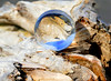 Driftwood and Ball Series (dmeeds (on and off)) Tags: driftwood crystalball refraction