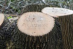 Tree Murder written on felled tree (Ian Redding) Tags: complaint stump treestump treemurder writing cutdown council fell deciduous displeasure tree sawn plant protest felled felling treesurgery unhappy bath uk