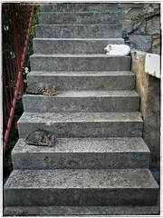 IMG_7903_2 (Rob Rocke) Tags: cats postira brac croatia countthecats dalmatia unstuckintime vbt stairway findthecats snapseed kitties