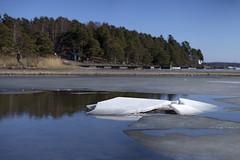 Årsta Havsbad (Steffe) Tags: årstahavsbad hårsfjärden haninge sweden sigma105mm