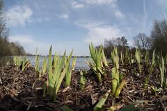 Reindersmeer (thomas druyen) Tags: reindersmeer natur naturschutzgebiet well bergen niederlande nationalpark maasduinen naturlandschaft erde himmel gras garten see nikon d750 fisheye