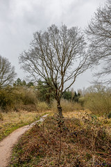 Ufton Fields Nature Reserve 8th April 2018 (boddle (Steve Hart)) Tags: ufton england unitedkingdom gb wild wilds wildlife life nature natural bird birds flowers flower fungii fungus insect insects spiders butterfly moth butterflies moths creepy crawley winter spring summer autumn seasons sunset weather sun sky cloud clouds panoramic landscape steve hart boddle steven bruce wyke road wyken coventry united kingdon great britain canon 5d mk4 6d 100400mm is usm ii 2470mm standard