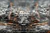 Destino de las explicaciones - Diaz De Vivar Gustavo (Diaz De Vivar Gustavo) Tags: destino de las explicaciones diaz vivar gustavo julio cortázar no hay que explicar nada photographie