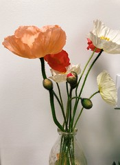 97/365 (moke076) Tags: 2018 365 project 365project project365 oneaday photoaday iphone cell cellphone mobile flowers blooming poppy blooms vase glass minimal