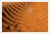 Traces de pattes -  Traces of legs (diaph76) Tags: extérieur sable sand brindilles brushwood tunisie tunisia desert traces