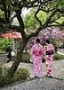 Blossoms (kimbar/Thanks for 3.5 million views!) Tags: japan kamakura cherryblossoms women kimono umbrella tree
