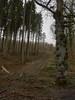 Hexenteich - Menden (Sauerland) (bh-fotografie) Tags: hexenteich menden sauerlan sauerland mft m43 microfourthirds nrw 12mm summilux leica dg panasonic 14 olympus penf wald forest