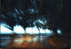 * (PattyK.) Tags: ioannina giannena giannina epirus ipiros balkans hellas ellada greece grecia griechenland europe europeanunion ιωάννινα γιάννενα γιάννινα ήπειροσ ελλάδα βαλκάνια ευρώπη snapseed amateurphotographer lakeside lakefront waterfront trees motion moving road mycity whereilive