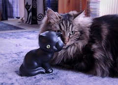 We spy with our pretty green Eyes (pianocats16) Tags: cat kitty fluffy adorable cute black figure green eye