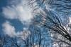 DSC00149 (johnjmurphyiii) Tags: 06416 clouds connecticut cromwell originalarw shelly sky sonyrx100m5 spring usa yard johnjmurphyiii