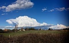 Cumulus, et ciel bleu en Petite Camargue -  IMG_3260 (6franc6) Tags: occitanie languedoc gard mars 2018 6franc6 petitecamargue