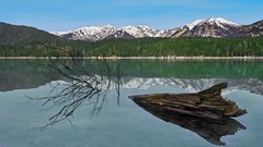 The fallen Tree (redfurwolf) Tags: eibsee lake tree water sky mountains snow forest landscape seascape bavaria germany redfurwolf sonyalpha a7rm3 sony captureonepro11 nature reflection