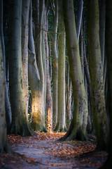 Licht im dunklen Wald (Petra Runge) Tags: wald bäume licht buchen natur landschaft landscape nature forest woodland trees light baum