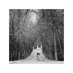 Sony, Samsung y Huawei-1 (juan jose aparicio) Tags: bw garden park winter tree landscape movile movil parque arboles paisaje