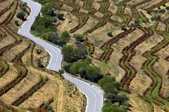 Ziguezagueando!! (puri_) Tags: vinhedos ziguezague outono cores vermelho verde estrada